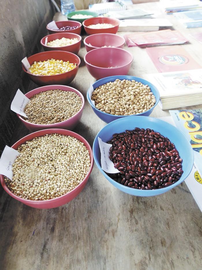 Bancos de semilla