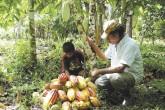 Cacao de Nicaragua tras marca país