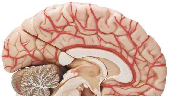 Cerebro, sonidos