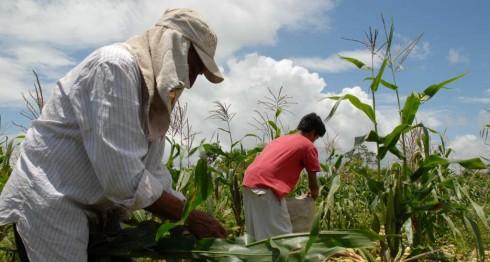 Granos básicos,Nicaragua,subsidio