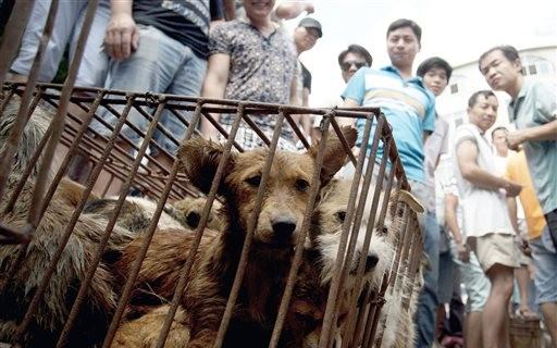 perros, carne de perro
