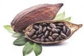 Calidad del cacao nica  sortea baja producción