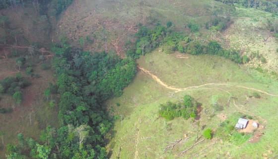 bosques en Nicaragua, deforestación