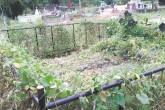 Cementerio de Jalapa sucio y sin atención