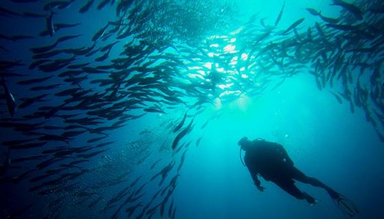 El mayor atractivo de la Isla del Coco está en las profundidades de sus aguas, pues la isla está deshabitada.