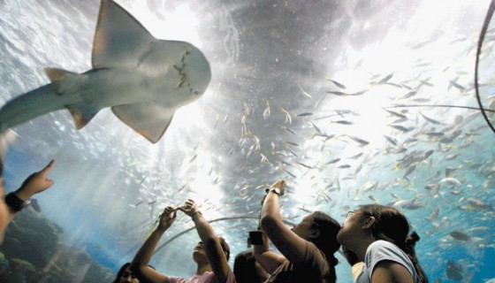 Visitantes observan especies marinas en el acuario Parque Oceánico de Manila, Filipinas, mientras activistas protestas por lo que consideran daños a la fauna al exhibirla.LAPRENSA/EFE