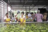 Otros cultivos para mitigar pérdidas