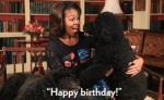 Puedes usar los GIFs para felicitar cumpleaños y expresar emociones a través de imágenes animadas. BBC MUNDO/GIPHY