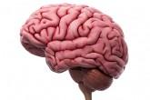 Usamos más del 10 por ciento del cerebro