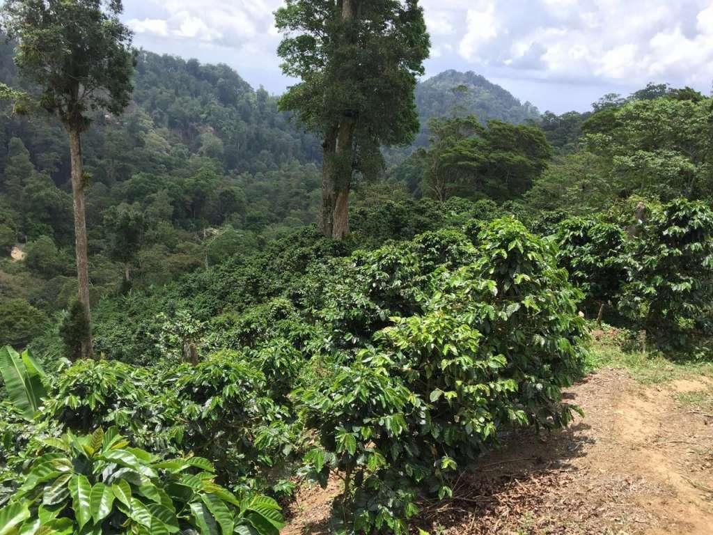 café de calidad, Nicaragua